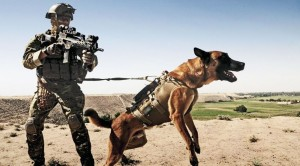 Famous TV Host Gets ATTACKED By Military Dog