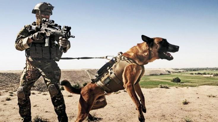 Famous Dog Training On Tv