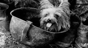 WWII's Tiniest Hero – How An Adorable Little Dog Changed The World Of War