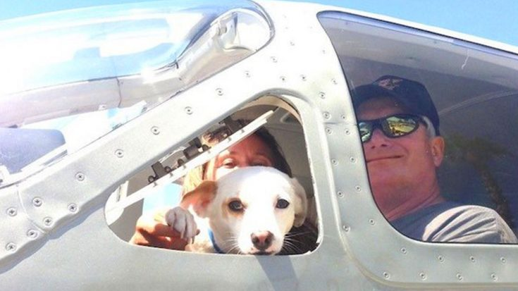 Courageous Pilots Unite For World Record Breaking Dog Rescue | World War Wings Videos