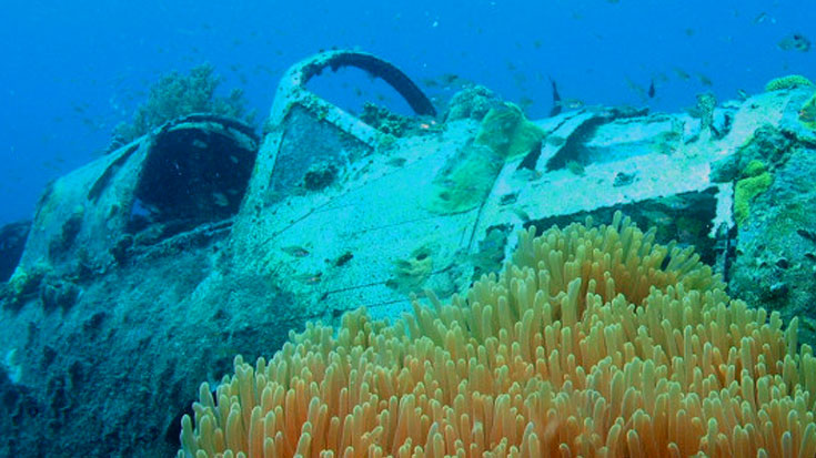Diver Uncovers Warbird Wreck – Then Restricted From Returning To The Aircraft | World War Wings Videos