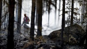 Recent Destruction Of German Forests Has WWII Connection – And It's Only Getting Worse
