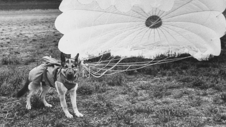 This Is How WWII Paradogs Were Trained To Jump Into War Zones | World War Wings Videos