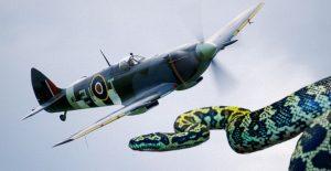 Spitfire Pilot Recalls Epic Cockpit Wrestle With Snake