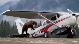 Here's Your Only Chance To See A Bear Doing A Preflight Check