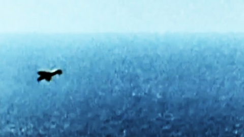 Spitfire Ace Dives Into Sea To Rescue Bf-109 Pilot | World War Wings Videos